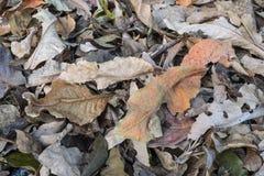Droog de bladeren Stock Afbeeldingen