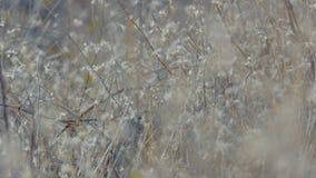 Droog de wintergras stock videobeelden