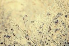 Droog die gras met breekbare rijp in koude de winterdag wordt behandeld stock foto