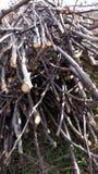 Droog dun hout voor het verwarmen stock afbeelding