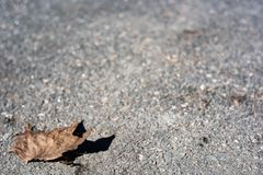 Droog eenzaam blad op het asfalt stock foto's