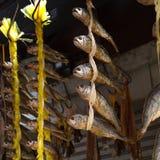 Droog fied het hangen voor verkoop in een vissenmarkt royalty-vrije stock foto's