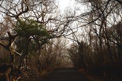 Droog Forest Road Royalty-vrije Stock Afbeeldingen