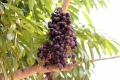 Droog fruit Stock Foto's