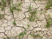 Droog gebarsten aarde met gras, droogte Stock Afbeeldingen