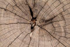 Droog gebarsten boom Stock Afbeelding