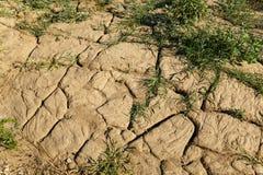 Droog gebarsten grond met onkruidgras het groeien in de spleten Het globale verwarmen, veranderingen in klimaat en droogte royalty-vrije stock afbeeldingen
