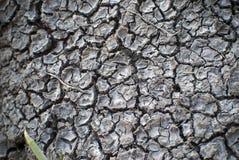 Droog gebarsten modderige bank Stock Foto's