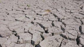 Droog gebroken grond van droogte op meer, rivier of overzeese bodem stock videobeelden