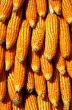 Droog geel graan Stock Fotografie