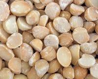 Droog geroosterd en de gezouten macadamia noten bekijken dicht Stock Foto's