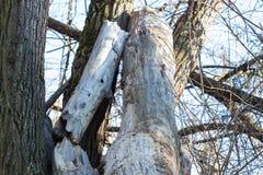 Droog gestorven boom stock afbeeldingen