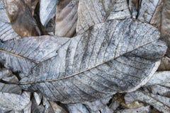 Droog gevallen bladeren royalty-vrije stock afbeelding