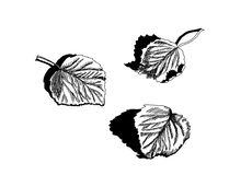 Droog gevallen bladeren van berk Stock Afbeeldingen