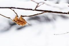 Droog Gevallen die Blad door Sneeuw wordt behandeld Stock Foto