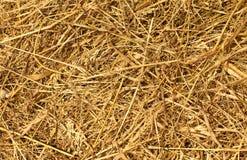 Droog Gouden Hooi of Straw Texture Stock Foto