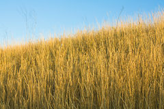Droog gras Stock Foto's