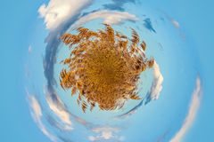 droog gras 360 Royalty-vrije Stock Foto's