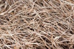 Droog gras Stock Afbeeldingen