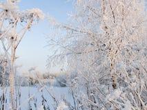 Droog gras dat met sneeuw wordt behandeld Stock Fotografie