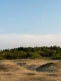Droog gras in de duinen door het overzees stock afbeeldingen