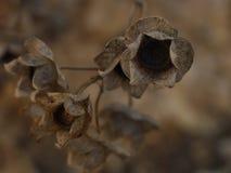 Droog gras in de herfst royalty-vrije stock afbeelding