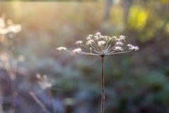 Droog gras in de herfst Stock Afbeelding