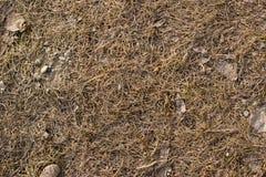 Droog gras in de lente Royalty-vrije Stock Fotografie