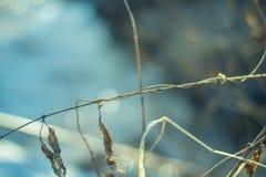Droog gras in de vroege lente op een zonnige dag Stock Afbeelding