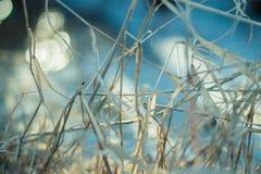 Droog gras in de vroege lente op een zonnige dag Stock Foto