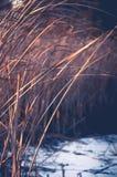 Droog gras in de winter Royalty-vrije Stock Foto's