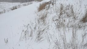 Droog gras in de winter op sneeuw is er in openlucht zware sneeuw Rusland het aardlandschap stock videobeelden