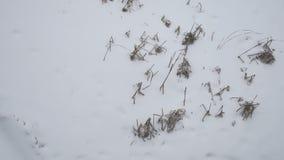 Droog gras in de winter op sneeuw is er zware sneeuw Rusland in openlucht het aardlandschap stock videobeelden
