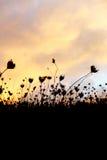 Droog gras, dramatische bewolkte hemel als achtergrond Stock Foto