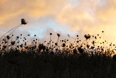 Droog gras, dramatische bewolkte hemel als achtergrond Stock Afbeelding