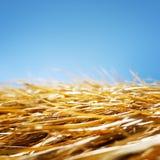 Droog gras en blauwe hemel Stock Afbeelding