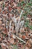 Droog gras en bruine bladeren rond stock afbeeldingen