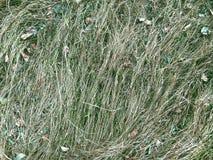 Droog gras in het bos met het gras sward gras van het bladerengazon stock afbeelding