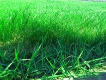 Droog gras in het bos met het gras sward gras van het bladerengazon royalty-vrije stock afbeelding