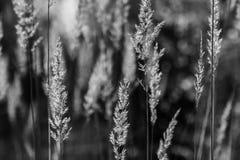 Droog gras in het Russische bos stock foto's