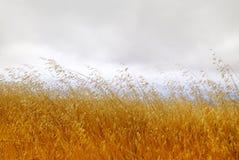 Droog Gras met Bewolkte Hemel Royalty-vrije Stock Fotografie