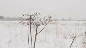Droog gras met grote sneeuwkappen op de achtergrond van de winterbos op een sneeuwdag stock videobeelden