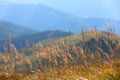 Droog gras op bergweide Royalty-vrije Stock Afbeeldingen