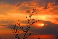 Droog gras op de achtergrond van de zonsonderganghemel Stock Afbeelding
