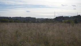 Droog gras op de achtergrond van de stad met het overgaan van auto's stock video