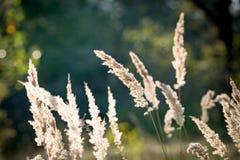 Droog gras op de zomerweide Royalty-vrije Stock Foto's