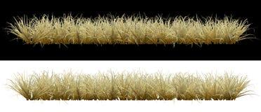 Droog gras op een achtergrond Royalty-vrije Stock Afbeeldingen