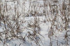 Droog gras op een snow-covered gebied Ð ¡ ух Ð°Ñ  Ñ 'раР² а Ð ½ а Ñ  Ð ½ Ð?Ð ³ у stock fotografie
