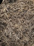 Droog gras op het de winterland stock afbeelding