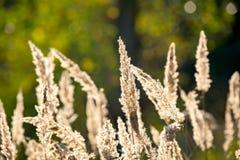 Droog gras op weide Royalty-vrije Stock Foto's